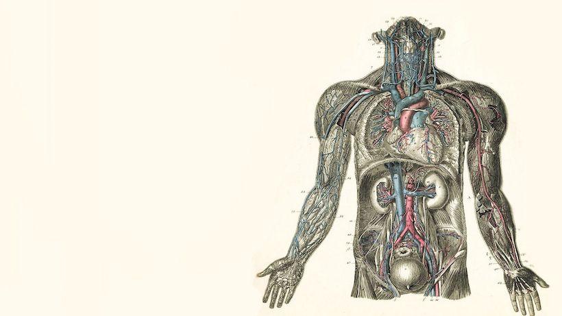 دانلود پاور پوینت آناتومی عضلات بدن انسان
