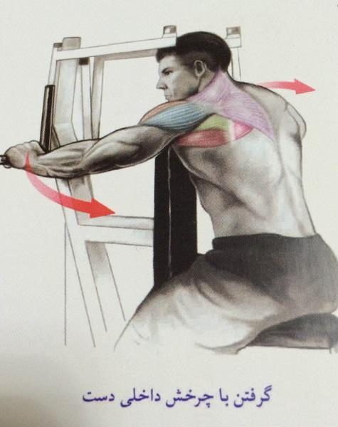 انجام حرکت قفسه سینه با تصویر
