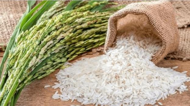 آیا برنج باعث چاقی میشود