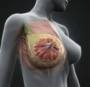 تاثیر رژیم و ورزش بر سینه زنان